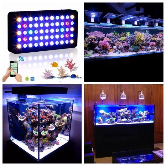 aquário marinho iluminação
