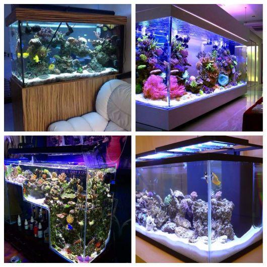 tamanho ideal para aquário marinho