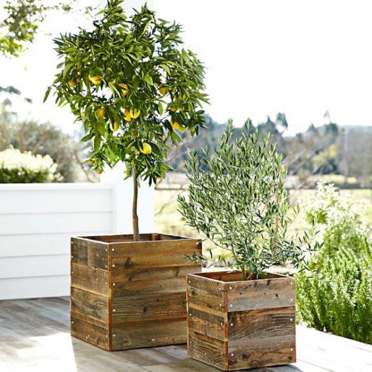 Vaso de madeira claro com madeira rústica e ávore selvagem pequena plantada.
