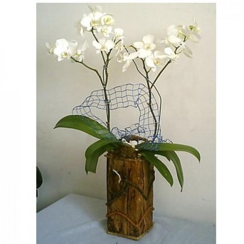 Modelo de vaso de madeira pequeno redondo com orquídea plantada.
