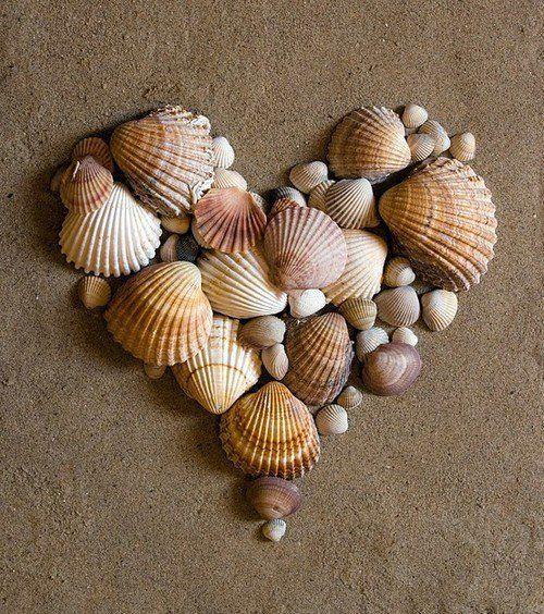 Coração feito com conchas.
