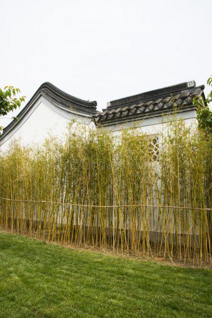 bambu de jardim na parede