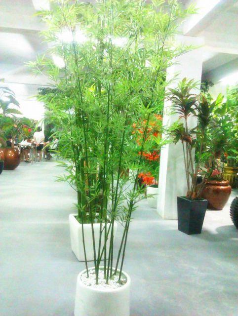 Bambu de jardim principais tipos como cuidar e dicas de - Tipos de bambu ...