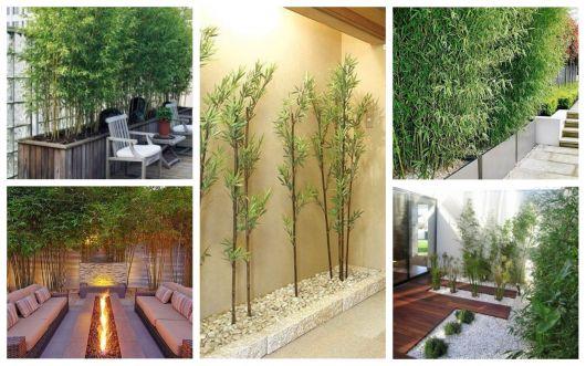 opções de bambu de jardim