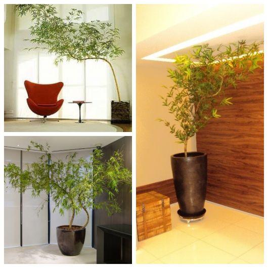 Tende bambu fabulous gallery of tende bambu leroy merlin avec da esterno per porte in legno - Bambu in vaso da esterno ...