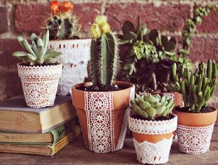 Diversas suculentas em vasos de cerâmica.