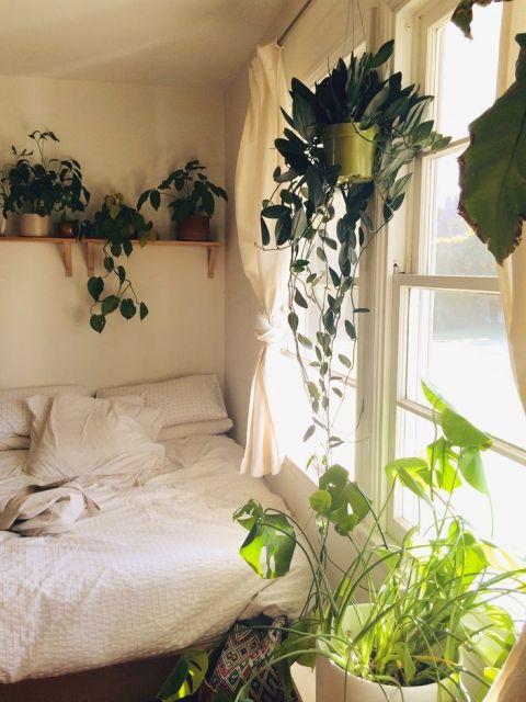 decoração com plantas na janela do quarto
