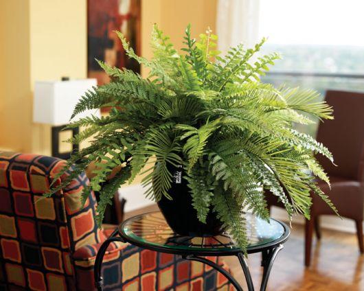ideias de decoração com plantas