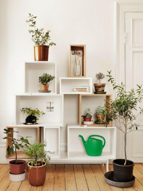 projetos de decoração com plantas