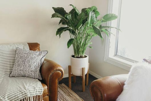 decoração com plantas ao lado do sofá