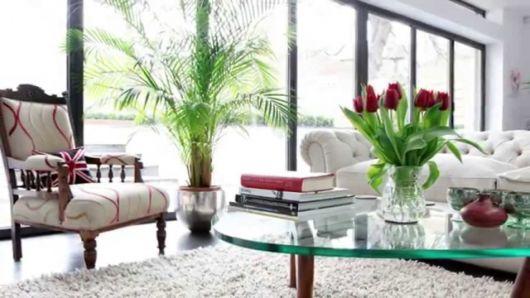 decoração com plantas com vasos na sala