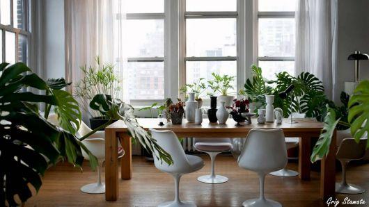 dicas para planejar decoração com plantas
