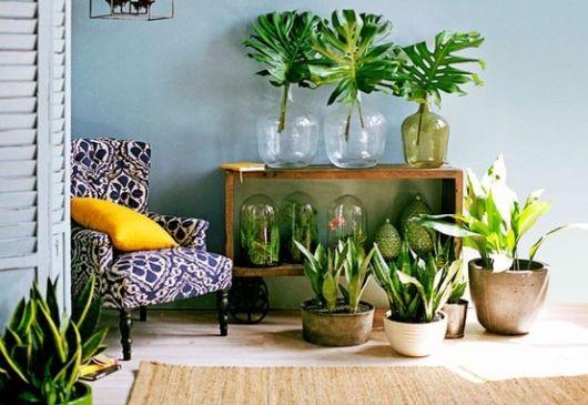 fotos de decoração com plantas