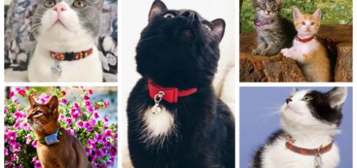 modelos de coleira para gato