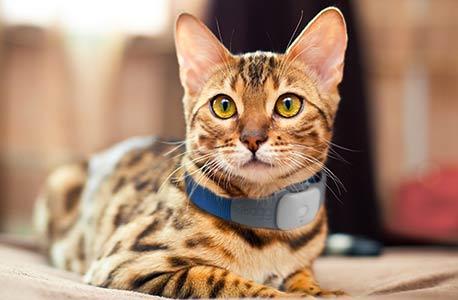 coleira para gatos com GPS