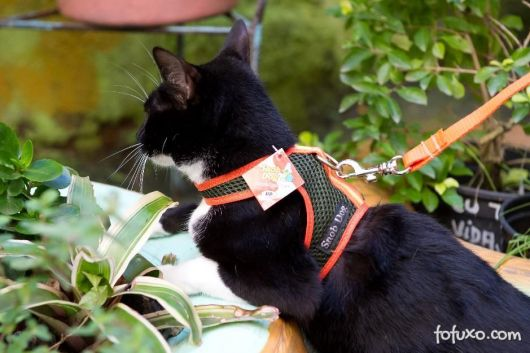 coleira para gatos para passear