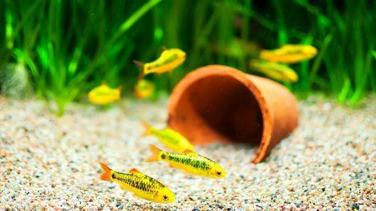 Areia para aquário.
