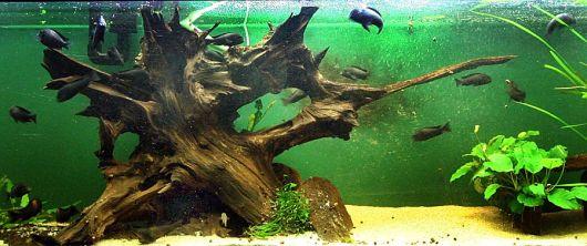 Tronco para aquário.