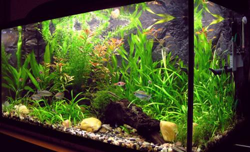 Plantas para aquário.