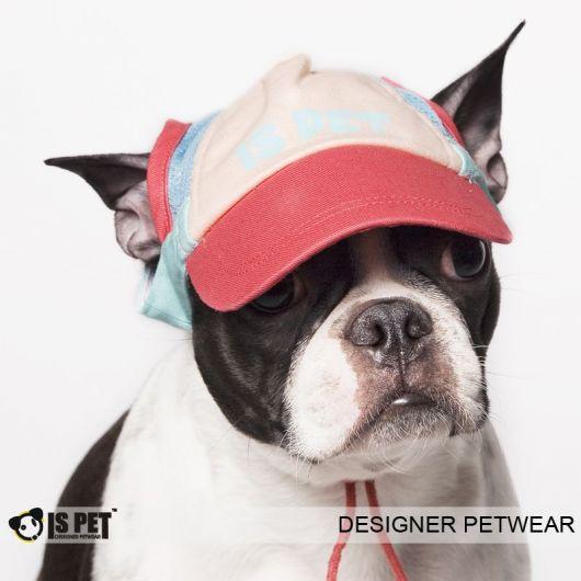 Boné para cachorro colorido.
