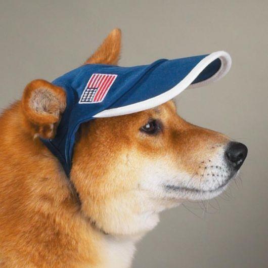 Boné para cachorro azul.