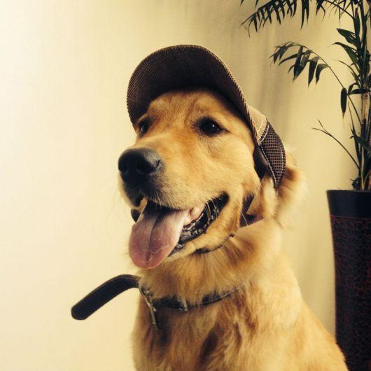 Boné para cachorro marrom.