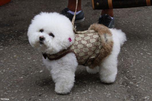 roupinha poodle