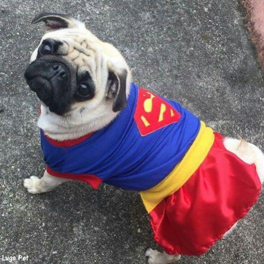 roupinha Superman