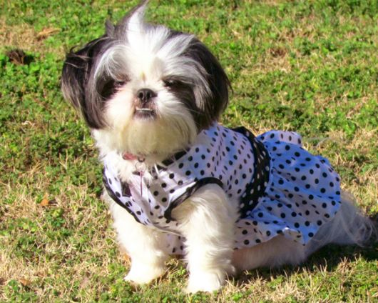 vestido cachorra