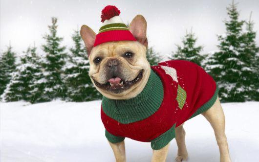 suéter cachorro