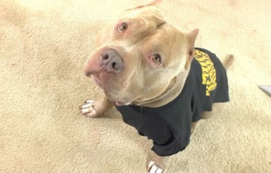 camiseta cão grande