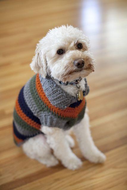 roupa de lã cachorro pequeno