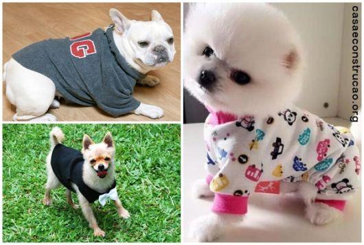 modelos para cães pequenos