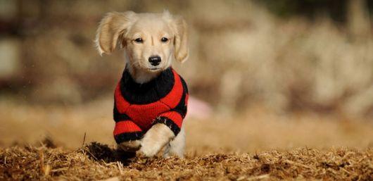 roupa cachorro com gola alta