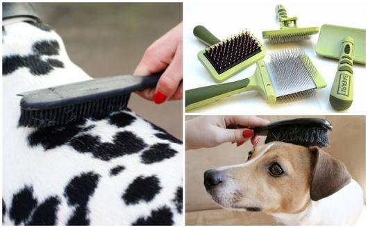 como escolher escova para cachorro