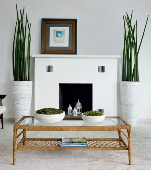 planta lança de sao jorge em vaso branco grande.