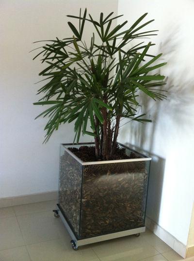 modelo de vaso quadrado de vidro com arbusto verde.