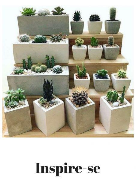 vasos de cimento pequenos com plantas suculentas.