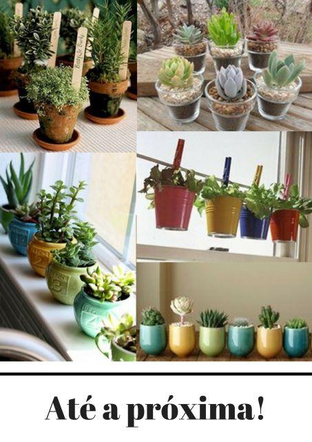 vasos coloridos com muitas plantas diferentes.