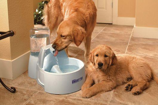 Compre o bebedouro conforme o tamanho de seus cães