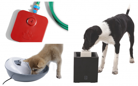 Veja ideias diferentes de bebedouros para cachorro