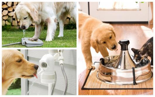 Conheça as principais tendências de bebedouro para cachorro!