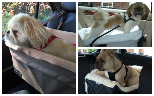 Proteja seu cãozinho assim: com uma cadeirinha especial