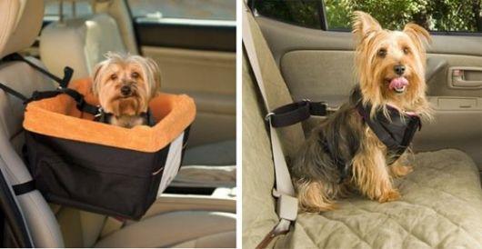 Veja duas versões para proteger seu cão: cadeirinha e cinto especial