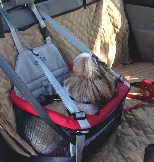 Além da cadeirinha especial você pode colocar uma capa para proteger o carro de sujeiras