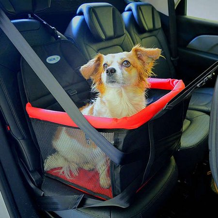 Os cachorrinhos ficam mais seguros com uma cadeirinha própria