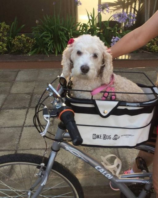 Também há cadeirinhas para você carregar seu pet na bike!