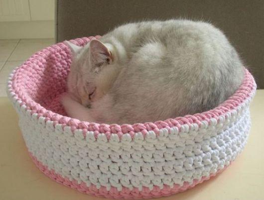 cama gato fêmea