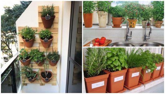 horta com vasos