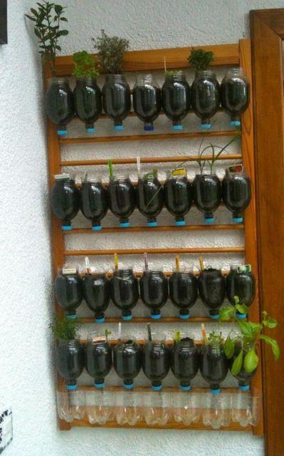 horta em casa com garrafa